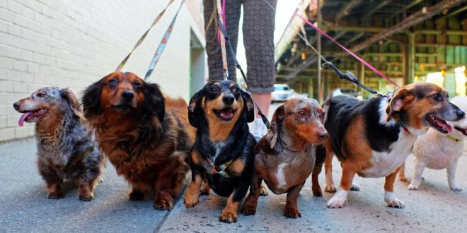 Starting a dog walking business