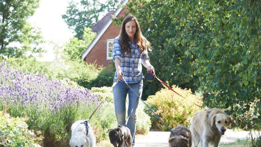 Pet Walking - Best Business Ideas to start in 2021
